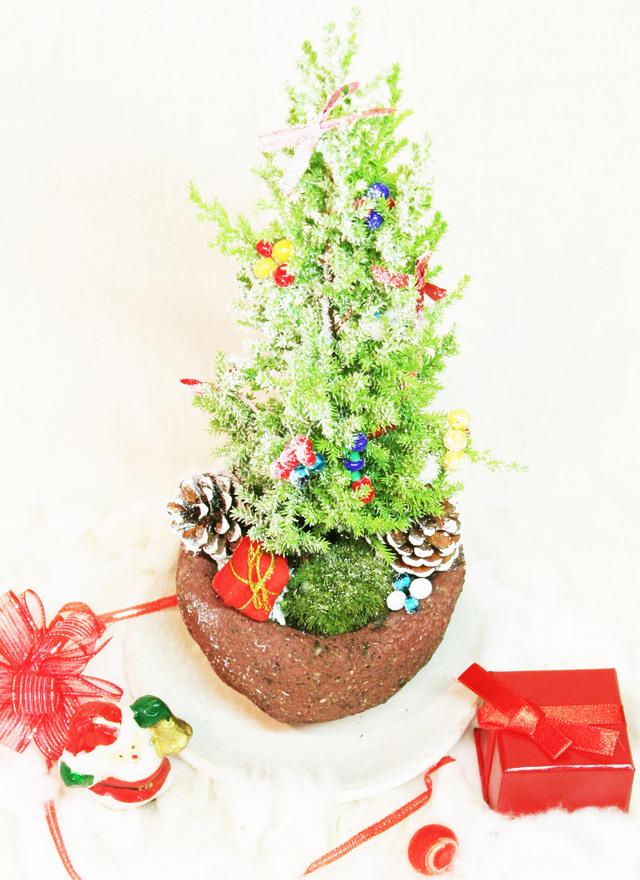 デコレーション盆栽(デコ盆)・クリスマス苔盆栽